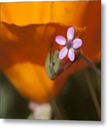 Little Beauty Metal Print