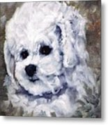 Little Bichon  Metal Print
