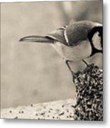 Little Bird Feeding Metal Print
