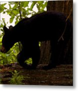 Little Black Bear Metal Print