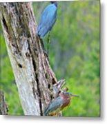 Little Blue And Green Heron Metal Print