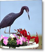 Little Blue Heron In Flower Pot Metal Print