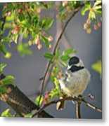 Little Chickadee In The Pink Metal Print