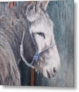 Little Donkey-glin Fair Metal Print