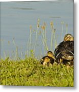 Little Duck's Moving Day Metal Print