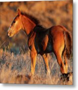 Little Filly Metal Print
