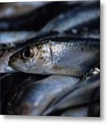 Little Fish at the Rialto Market in Venice Metal Print