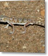Little Gecko Metal Print
