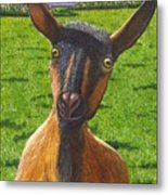 Little Goat Metal Print