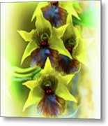 Little Green Apple Orchid On White Metal Print