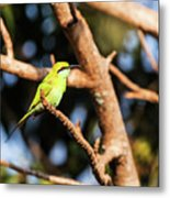 Little Green Bee Eater On A Branch Metal Print