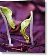 Little Green Sprouts  Metal Print
