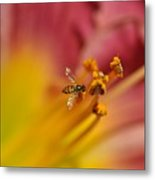 Little Hoverfly Metal Print