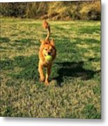 Little Lion Metal Print