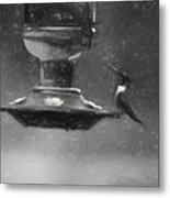 Little Male Hummingbird In Charcoal Metal Print