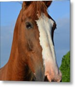 Little Mare Metal Print