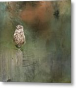 Little Owl On A Fence Metal Print