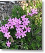 Little Pink Flowers Metal Print