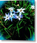 Little Star Wind Flowers Metal Print