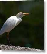 Little White Heron Metal Print