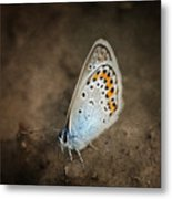 Little Wing Metal Print