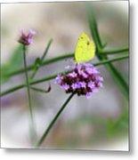 Little Yellow Butterfly On Verbena Metal Print