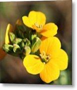 Little Yellow Flowers Metal Print