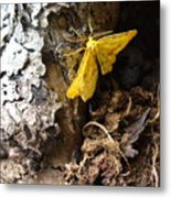 Little Yellow Moth Metal Print