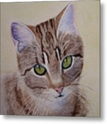 Little Zeke  Stray Cat Series One Metal Print