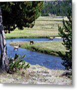 Live Dream Own Yellowstone Park Elk Herd Text Metal Print