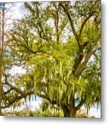 Live Oak And Spanish Moss 2 - Paint Metal Print
