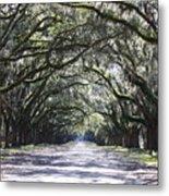 Live Oak Lane In Savannah Metal Print