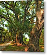 Live Oak Lane Metal Print by Steve Harrington