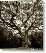 Live Oak Tree With Spanish Moss Metal Print