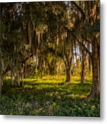 Live Oak Tree Metal Print