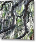 Live Oak With Spanish Moss And Palms Metal Print