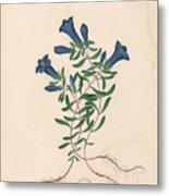 Liverpool Gentian With One Insect Metal Print