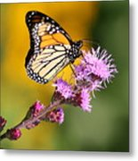 Living Color Metal Print