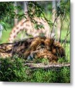 Living In Harmony - Lion Metal Print