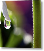 Living Water Metal Print