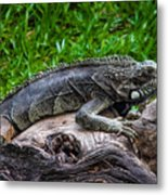 Lizard At The Zoo Metal Print