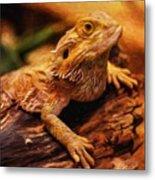 Lizard - Id 16217-202744-5164 Metal Print