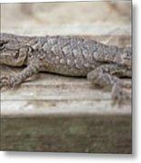 Lizard On Deck Metal Print