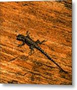 Lizard On Sandstone Metal Print