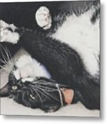 Lizzie - Cant Resist The Cuteness Metal Print