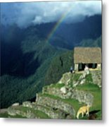 Llama And Rainbow At Machu Picchu Metal Print