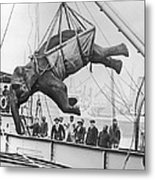 Loading Elephant, 1930s Metal Print