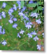 Lobelia Flowers Metal Print