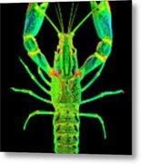 Lobster Crawfish In The Dark - Greenlime Metal Print