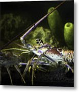 Lobster In Love Metal Print
